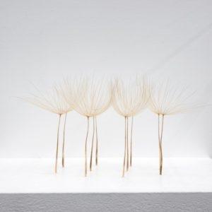 Kleine ovale Ansammlung (detail),2014, airborne seeds 5 x 10 x 8 cm