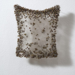 Klettenvlies (Burr fleece), 2010, Dog hair, burrs 19 x 17 x 1