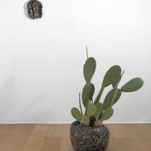 """""""Orlando (Cactus)"""", 2010-2013, Ceramic, cactus Wall piece:23,5 x 19 x 3,5 cm Floor piece: 30 x 35 x 35 cm Plant: 91,5 cm high"""