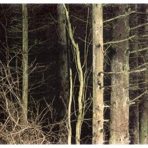 Untitled, 2002, Chromogene print Ed. 1/3 192 x 240 cm