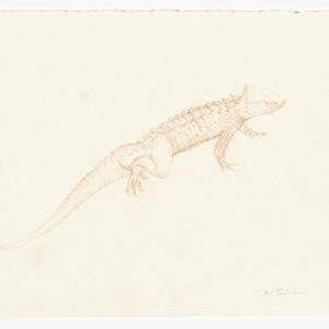 """""""The Book of Imaginary Beings"""" after Jorge Luis Borges (Dragon gracilis), 2013, Coloured pencil on paper 30 x 21 cm (framed: 33,6 x 42,6 x 3.8 cm)"""