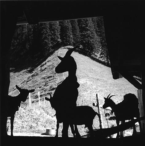 Gros-Haut-Cret Fribourg, (Suisse) 1989, Gelatin Silverprint 42 x 42 cm (framed 50 x 60 cm)