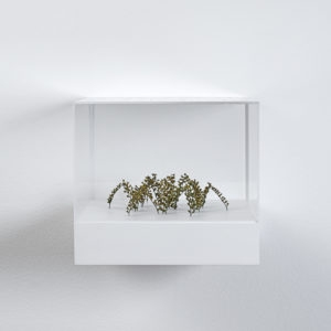 Bogenhexagon (Arched Hexagon), 2019, Plant stalks, 5,5 x 16 x 18 cm (In Plexiglas vitrine: 22 x 25 x 25 cm)