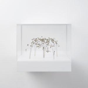 Kleine Bogenform (Little Arch Form), 2018, Grass stalks, 13 x 21 x 20 cm (In Plexiglas vitrine: 26 x 30 x 30 cm)