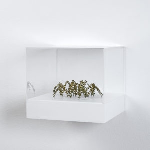 Christiane LÖHR, Bogenhexagon (Arched Hexagon), 2019, Plant stalks, 5,5 x 16 x 18 cm (In Plexiglas vitrine: 22 x 25 x 25 cm)