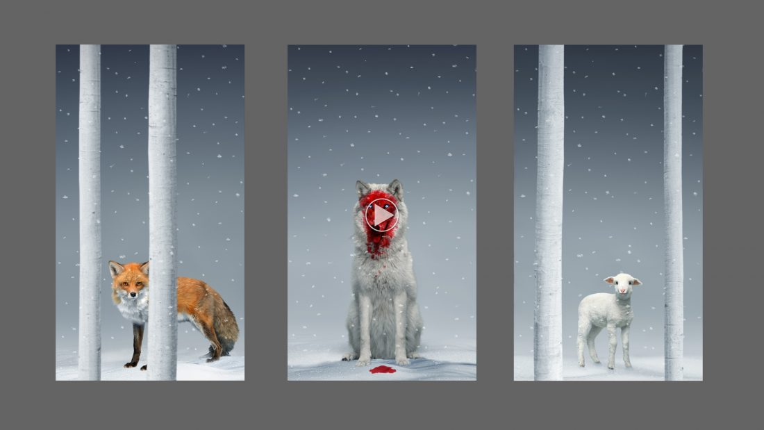 fox-wolf-lamb-Quincy-Sirius-Lamb-Chop-approved-final-tryptich-1-1100x619