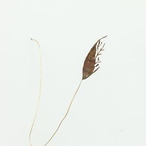 """""""Tree"""", 2020, Brass, Silver, 22 x 19 x 5 cm"""
