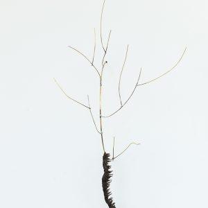"""Chenillette"", 2020, Brass, Pewter, Wood, 49 x 15 x 26 cm"