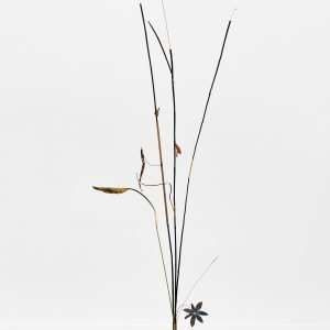 """Archètypes 1"", 2020, Bamboo, Copper, Brass, Seeds, Steel, Plants, Copper plated leaves, 270 x 140 x 70 cm"